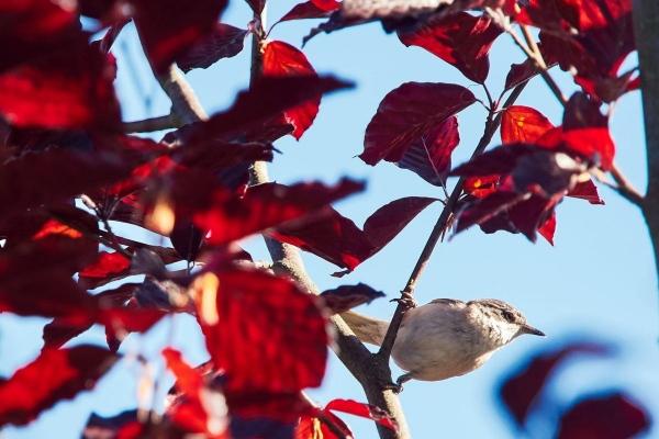 Kleiner Vogel im Busch