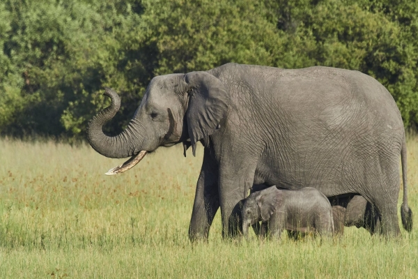 Elephanten Familie